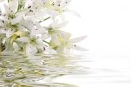 Fototapety KWIATY białe 2264 mini