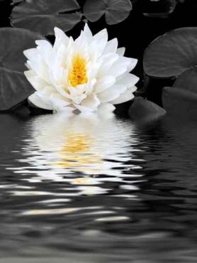 Fototapety KWIATY białe 2270