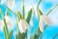 Fototapety KWIATY białe 2271 mini