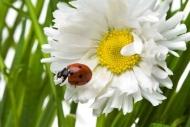 Fototapety KWIATY białe 2274 mini