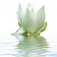 Fototapety KWIATY białe 2275 mini