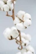Fototapety KWIATY białe 2279 mini