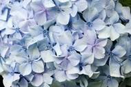 Fototapety KWIATY białe 2288 mini