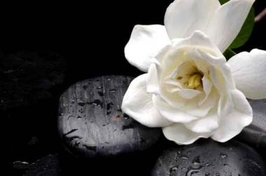 Fototapety KWIATY białe 2303