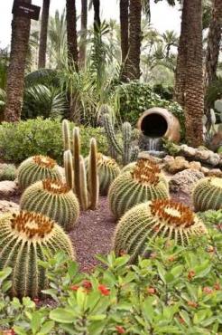 Fototapety KWIATY kaktusy 2386