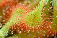 Fototapety KWIATY kaktusy 2388 mini