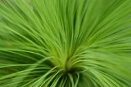 Fototapety KWIATY kaktusy 2390 mini