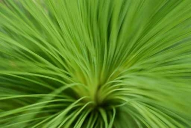 Fototapety KWIATY kaktusy 2390