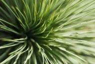 Fototapety KWIATY kaktusy 2392 mini