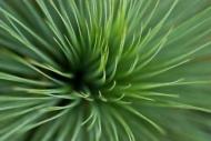 Fototapety KWIATY kaktusy 2393 mini