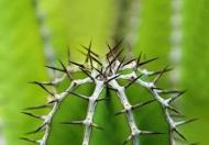 Fototapety KWIATY kaktusy 2395 mini
