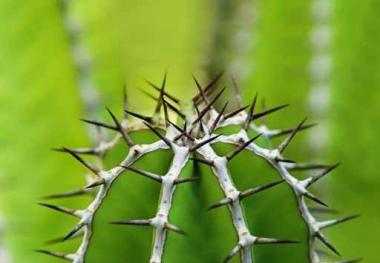 Fototapety KWIATY kaktusy 2395