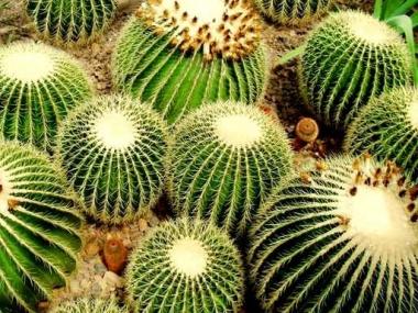 Fototapety KWIATY kaktusy 2396
