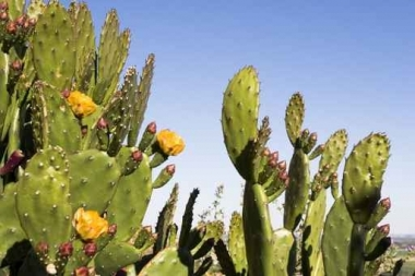 Fototapety KWIATY kaktusy 2397