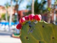 Fototapety KWIATY kaktusy 2399 mini