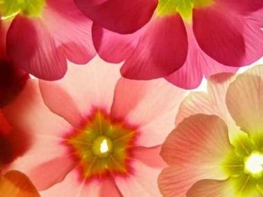 Fototapety KWIATY kolorowe 2404