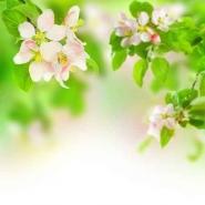 Fototapety KWIATY róż czerwień 2560 mini