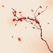 Fototapety KWIATY róż czerwień 2566 mini