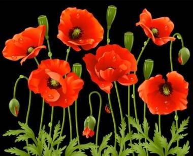 Fototapety KWIATY róż czerwień 2568