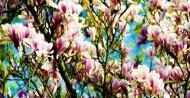 Fototapety KWIATY róż czerwień 2574 mini