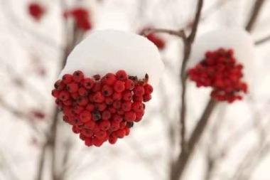 Fototapety KWIATY róż czerwień 2577
