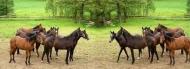 Fototapety ZWIERZĘTA konie 4028 mini