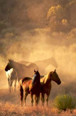 Fototapety ZWIERZĘTA konie 4031