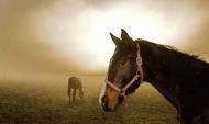 Fototapety ZWIERZĘTA konie 4032 mini