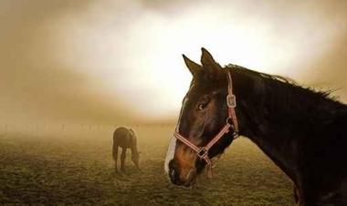 Fototapety ZWIERZĘTA konie 4032