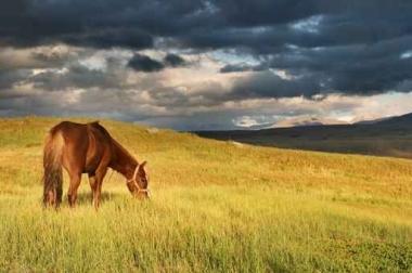 Fototapety ZWIERZĘTA konie 4033
