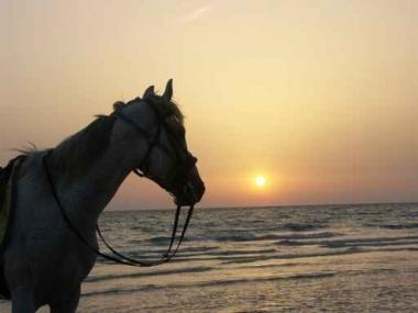 Fototapety ZWIERZĘTA konie 4035