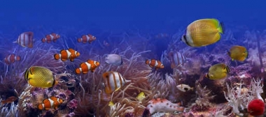 Fototapety ZWIERZĘTA życie pod wodą 4310