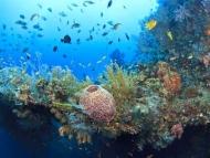 Fototapety ZWIERZĘTA życie pod wodą 4312 mini
