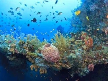 Fototapety ZWIERZĘTA życie pod wodą 4312
