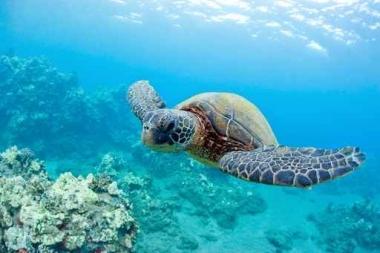 Fototapety ZWIERZĘTA życie pod wodą 4313
