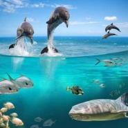Fototapety ZWIERZĘTA życie pod wodą 4314 mini