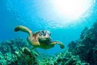 Fototapety ZWIERZĘTA życie pod wodą 4315 mini