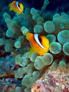 Fototapety ZWIERZĘTA życie pod wodą 4316