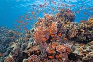 Fototapety ZWIERZĘTA życie pod wodą 4317 mini