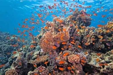 Fototapety ZWIERZĘTA życie pod wodą 4317