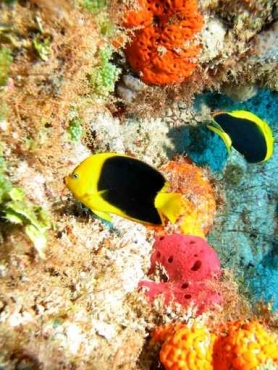 Fototapety ZWIERZĘTA życie pod wodą 4318
