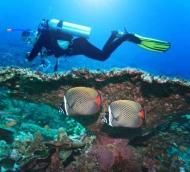 Fototapety ZWIERZĘTA życie pod wodą 4319 mini