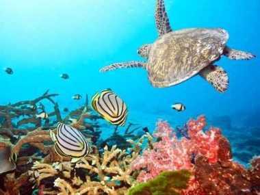 Fototapety ZWIERZĘTA życie pod wodą 4321