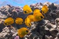 Fototapety ZWIERZĘTA życie pod wodą 4322 mini