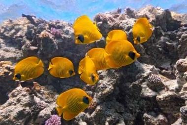 Fototapety ZWIERZĘTA życie pod wodą 4322