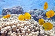 Fototapety ZWIERZĘTA życie pod wodą 4323 mini