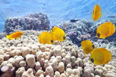 Fototapety ZWIERZĘTA życie pod wodą 4323