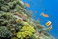 Fototapety ZWIERZĘTA życie pod wodą 4324 mini