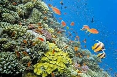 Fototapety ZWIERZĘTA życie pod wodą 4324