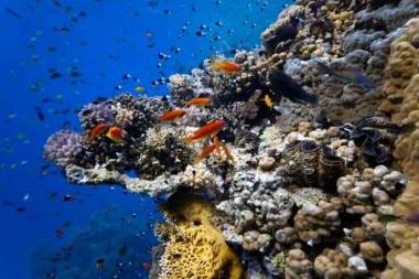 Fototapety ZWIERZĘTA życie pod wodą 4325
